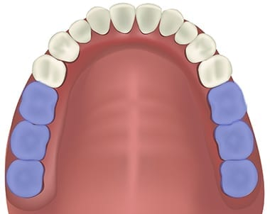 Molars position